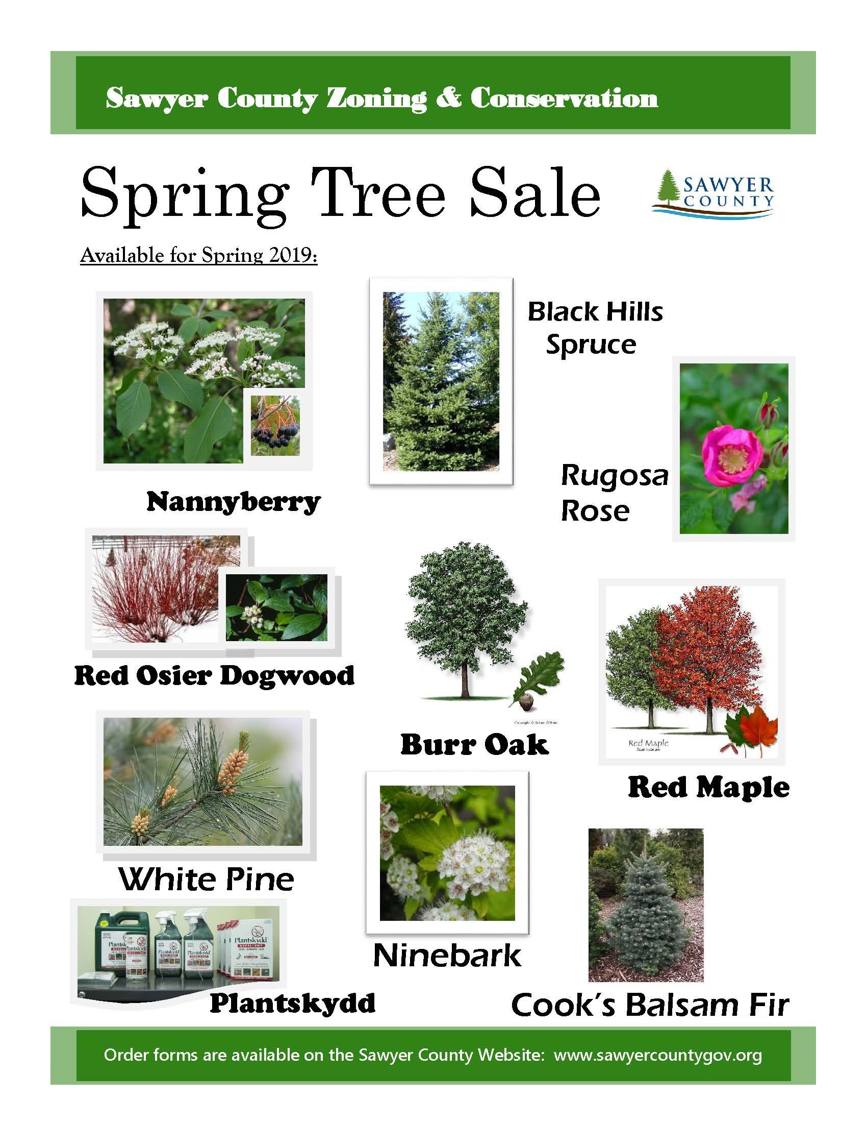 Tree Sale 2019 Sawyer County Wi